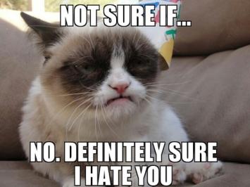 00 hate cat 2.jpg