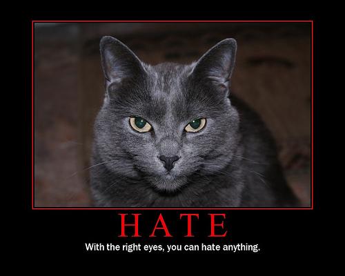 00 hate cat 3