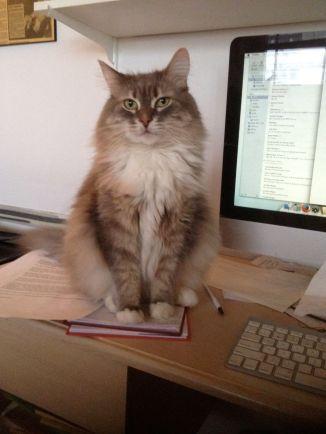 Annie-computer-desk